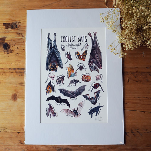 Coolest bat of the world: Volume 1 - print