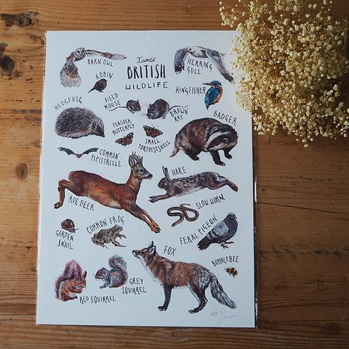 Iconic British Wildlife - A3 print