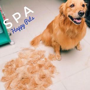 SPA para mascotas, perros, gatos