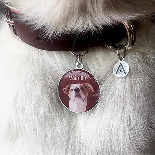 placas de identificacion para para perro, gato, mascota