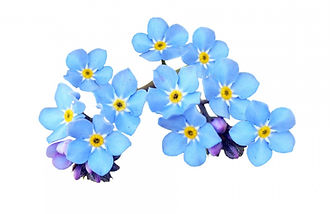 forget-me-not-isolated_edited.jpg