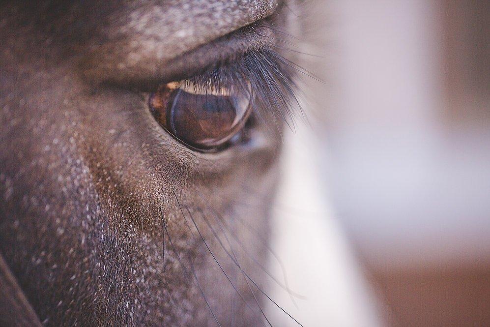 equine photographer Scunthorpe