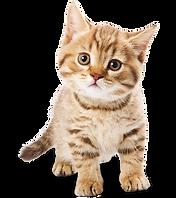 cat image blaire.png