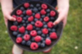 New Zealand berries