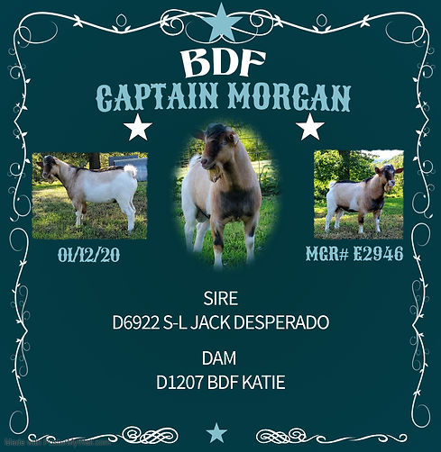 CAPT MORGAN.jpg