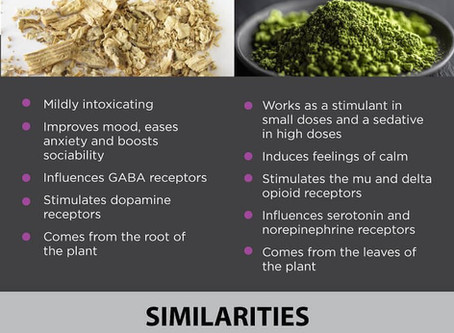 Kratom and Kava: Where's it from? What's it for?