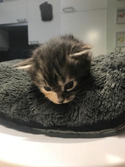 Kitten 7 - 3 weken1