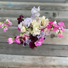 Sweet pea bonanza! We will have lots of