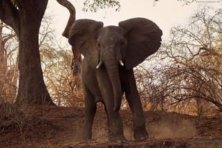 AFRIKA & JEEP SAFARI