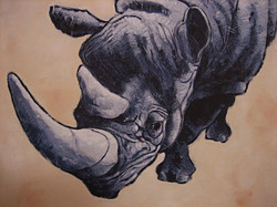 Rhino - Acrylic 2204