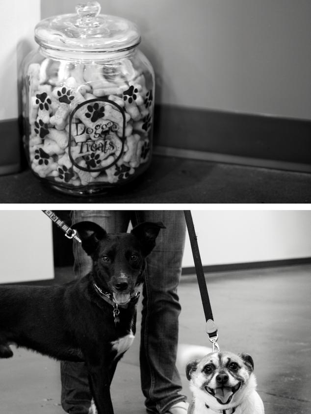 Dog & Kid Friendly