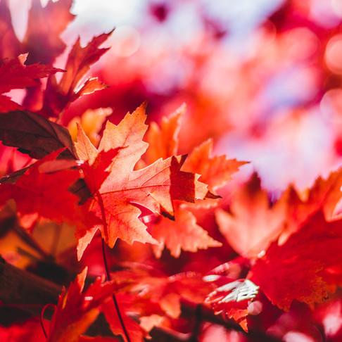 Meditação do Equinócio de Outono