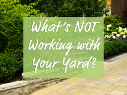 What's Not Working With Your Yard?