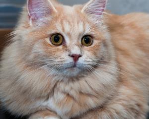 Kissa nimeltä Pupu