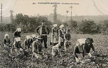 29-Finistere-Plougastel-Daoulas-Cueillet