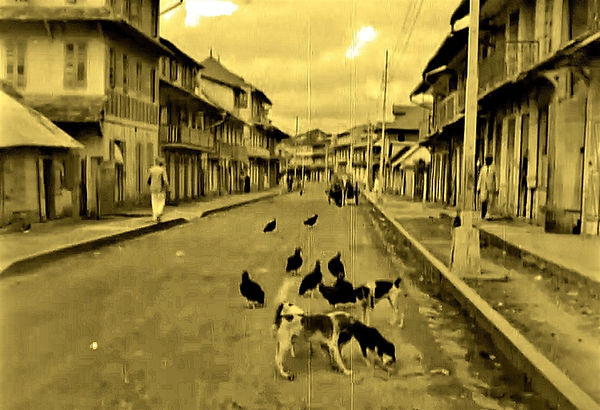 street scavengers in Cayenne, French Gui