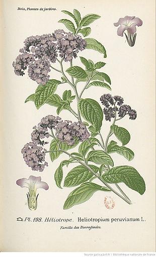 botanique _02.jpg