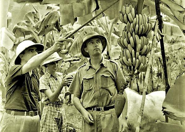 Administrators inspecting the banana cro