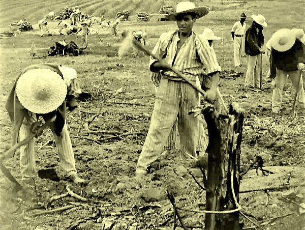 Prisoners, under guard, clearing stumps