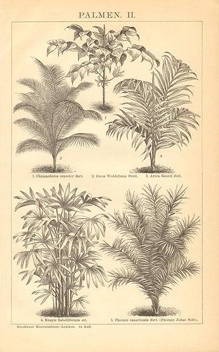botanique _01.jpg