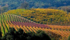 USA: Carmel Valley Wine Guide