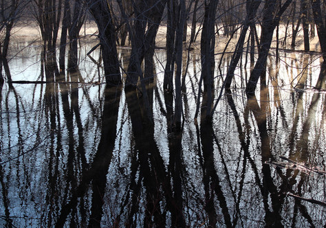 Flooded River Reflections