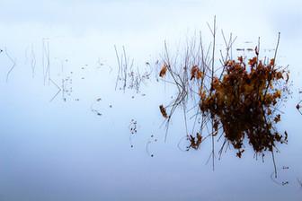 Flood Reflections