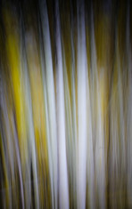 Abstract Trees (2)