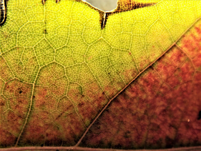 The Fingerprint of a Leaf
