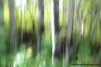 Abstracts of the Forest