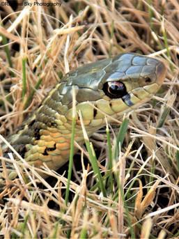 My Reflection in a Snake's Eye