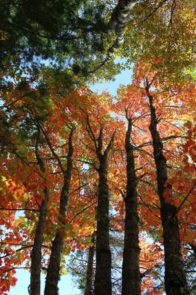 Splash of Autumn