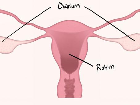 kista ovarium? apakah berbahaya?