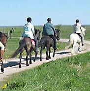 Kungshaga Gård erbjuder ridturer och ridskola på islandshäst. Alpackavandring med en snälla alpacka, i vacker natur.