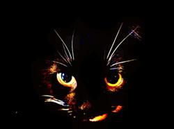 Katt_svart1