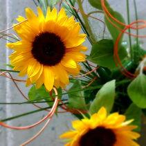 Slunečnice_250_edited.jpg