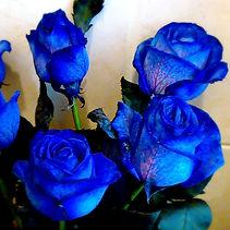 Modré růže_edited.jpg
