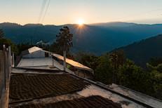 Web- Coffee Bird - Huehuetenango 6 - 022