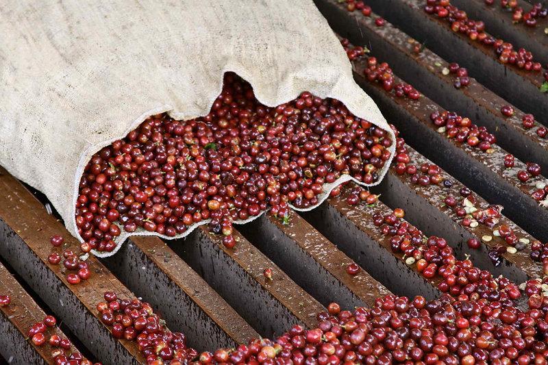 coffee-header-cherries.jpg