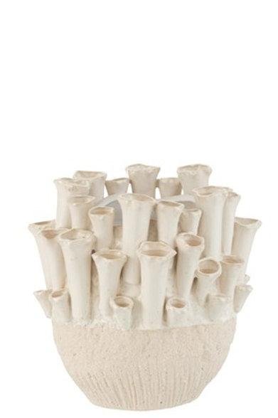 Vase anémone
