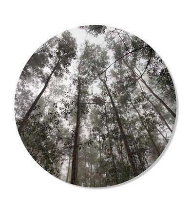 Cercle mural Forêt 50cm