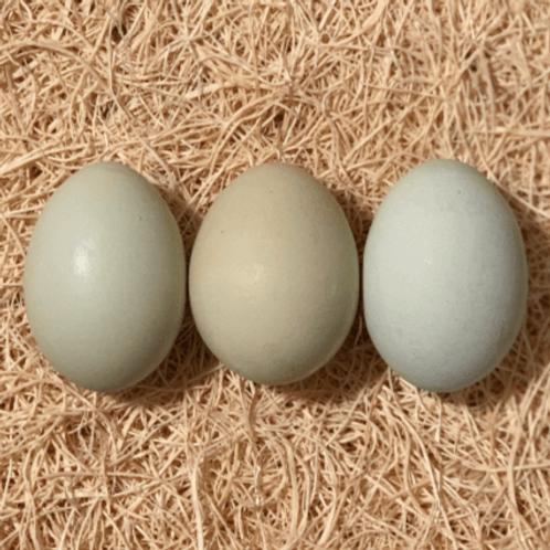 Easter Egger