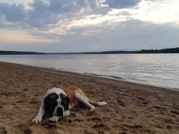 Как я провела лето с Собакой-Гулякой.