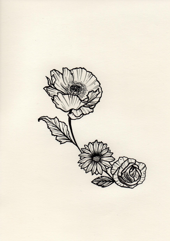 Coquelicot-Poppy Flower
