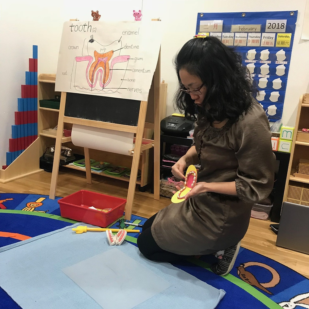 Montessori Circle Time: teeth model