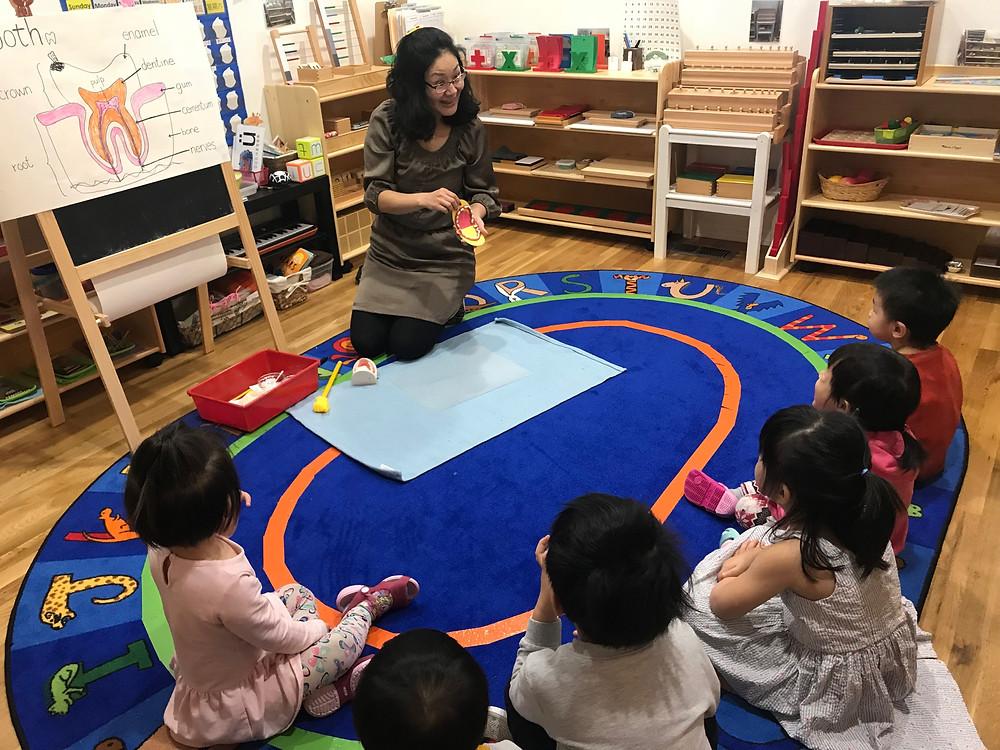 Montessori Circle Time: teeth model