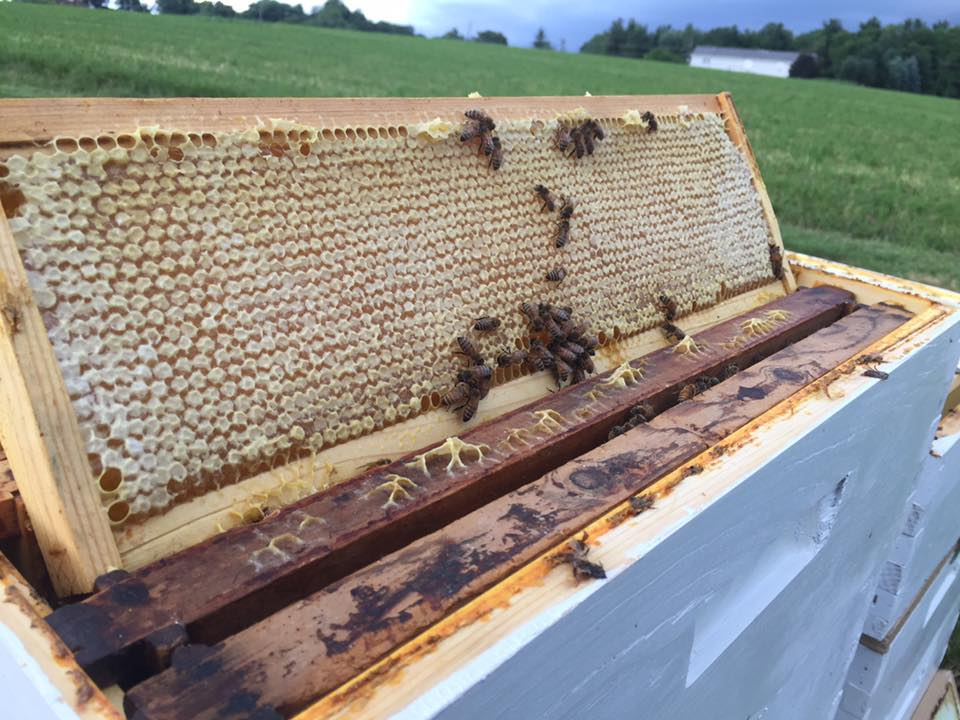 2017 Honey Frame