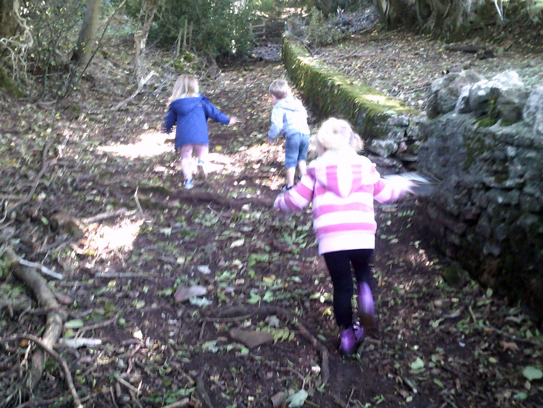 woodland walk 1.jpg