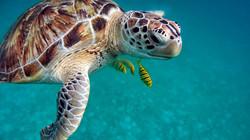 Diving Aquodiving Tremiti