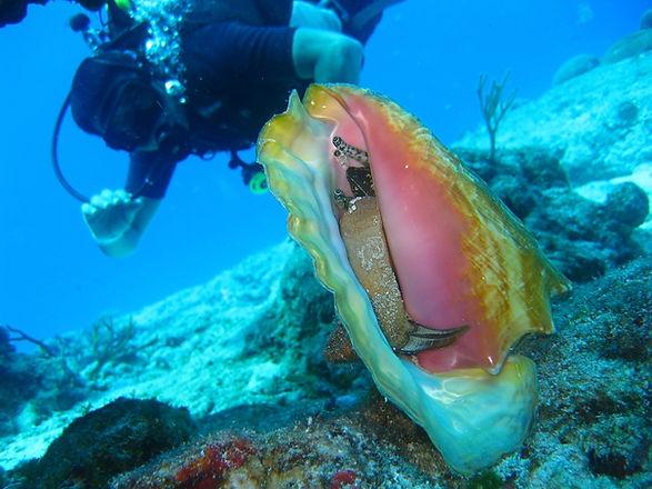 sub osserva fauna marina